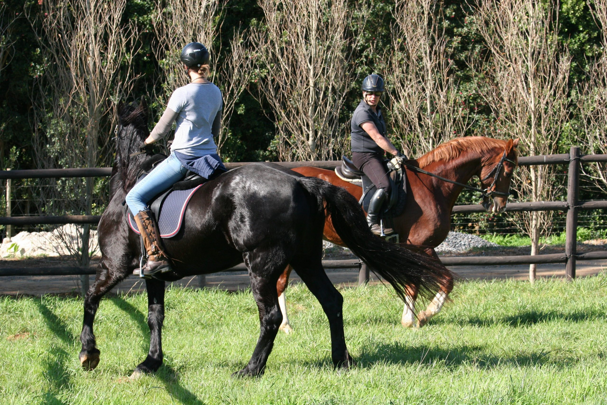 equestrian wireless training system for communication between trainer and horse rider