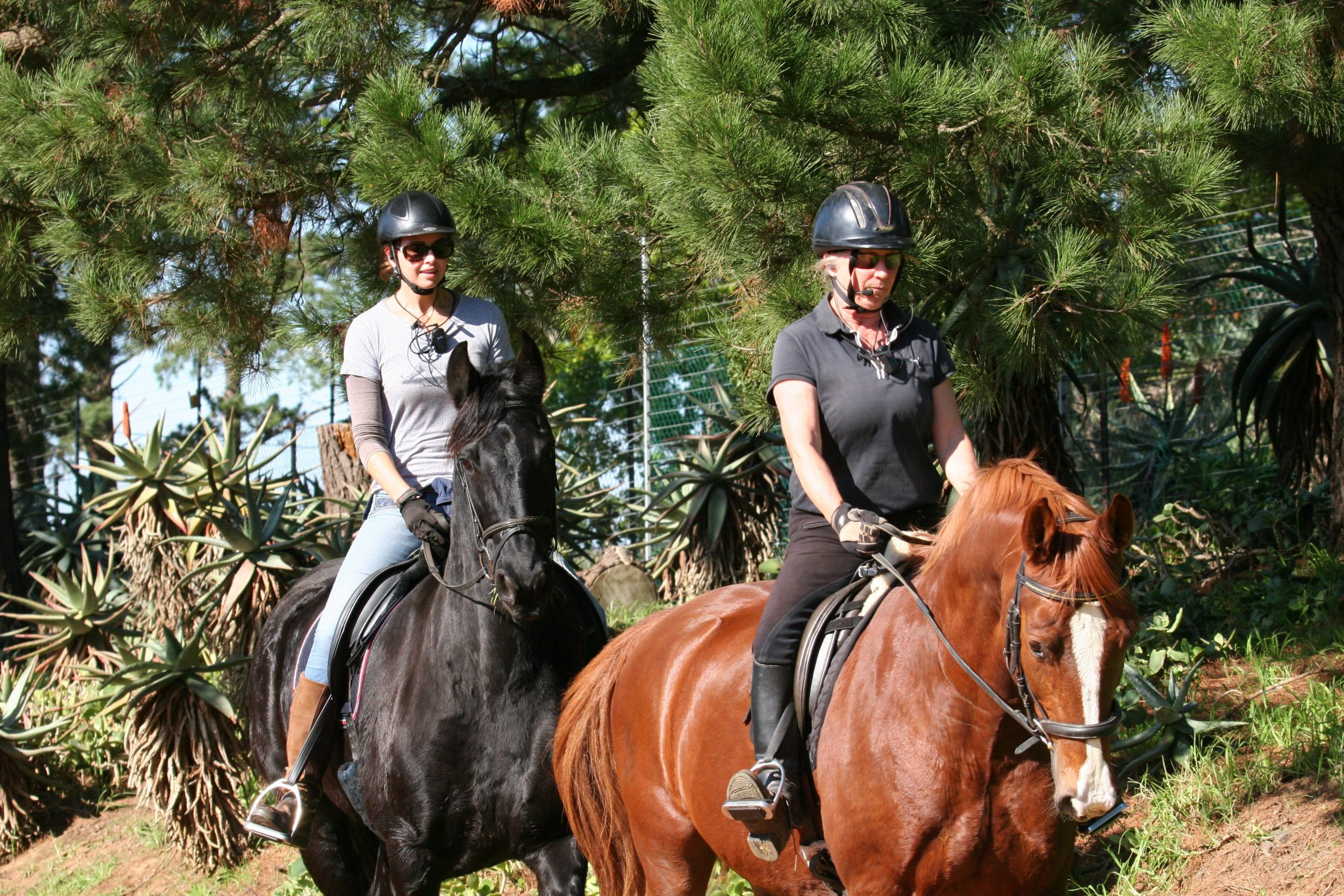 equestrian wireless training system instructions by trainer